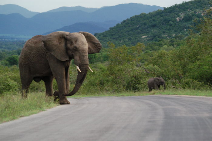 Scenic drive in the Central Kruger